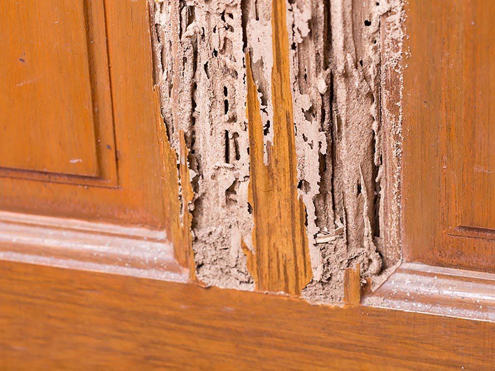 Maison: Du bois mou pourrait trahir la présence de termites.