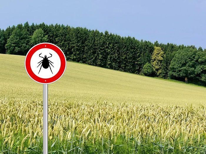 Le nombre de cas de maladie de Lyme augmente.