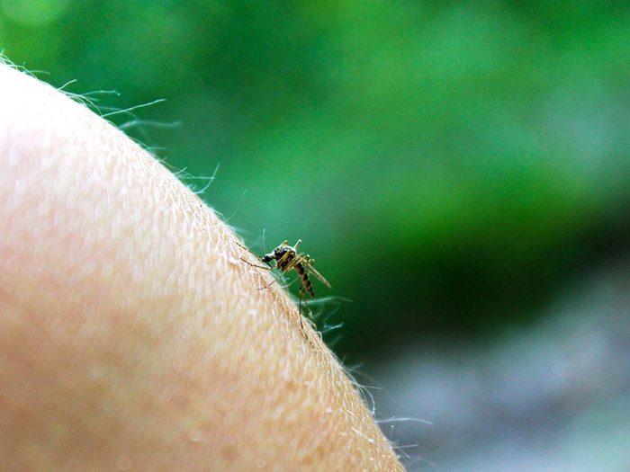 Maladies transmises pas des moustiques: Virus de l'encéphalite équine de l'ouest.