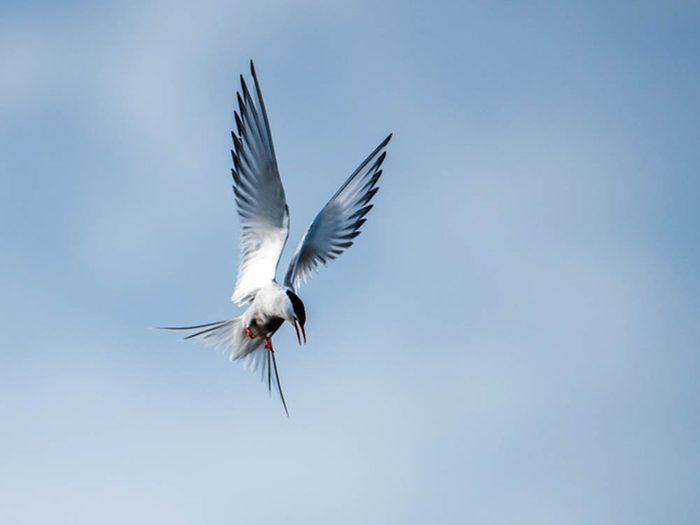 Mystères de la science: la migration des oiseaux.