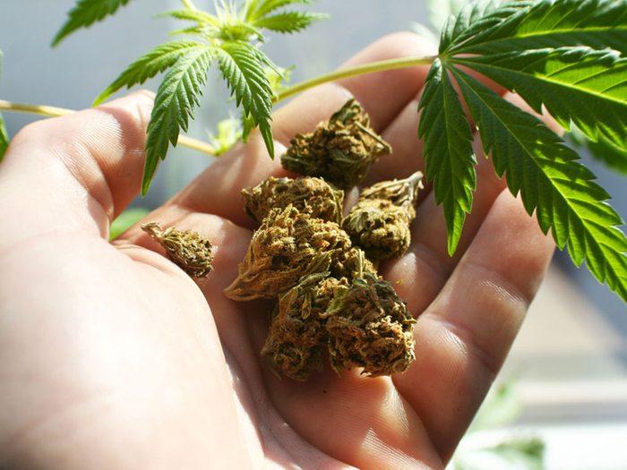 Mythe: la marijuana guérit le cancer.