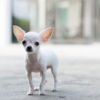 10 petits animaux les plus irrésistibles à travers le monde
