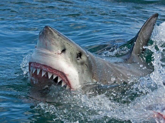 Le requin est plus souvent victime de l'humain que l'inverse.