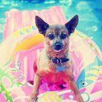 10 astuces pour la santé et la sécurité de votre chien en été