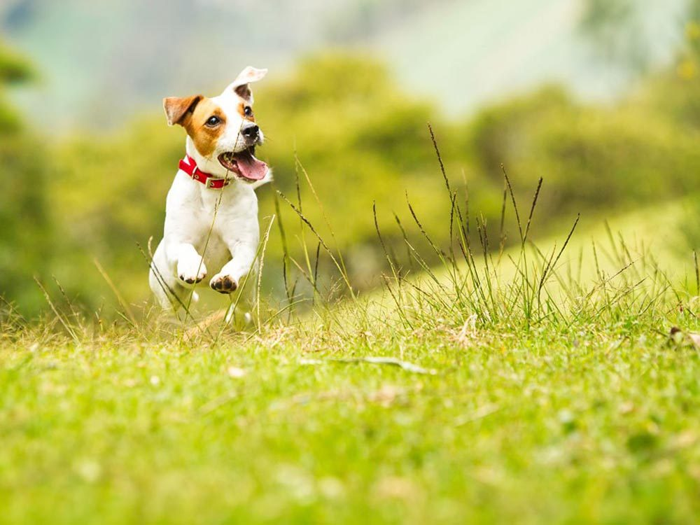 Pour la sécurité de votre chien: ne le laissez pas s'approcher des engrais.