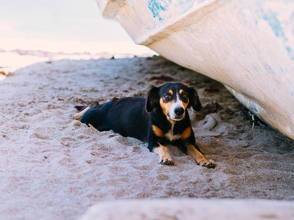 Pour la sécurité de votre chien: installez-le à l'ombre