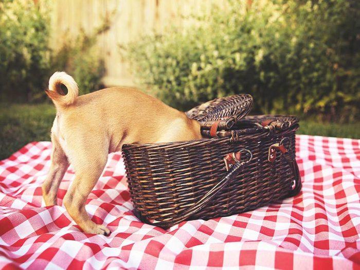 Pour la sécurité de votre chien: ne lui donnez pas les restes de votre pique-nique.