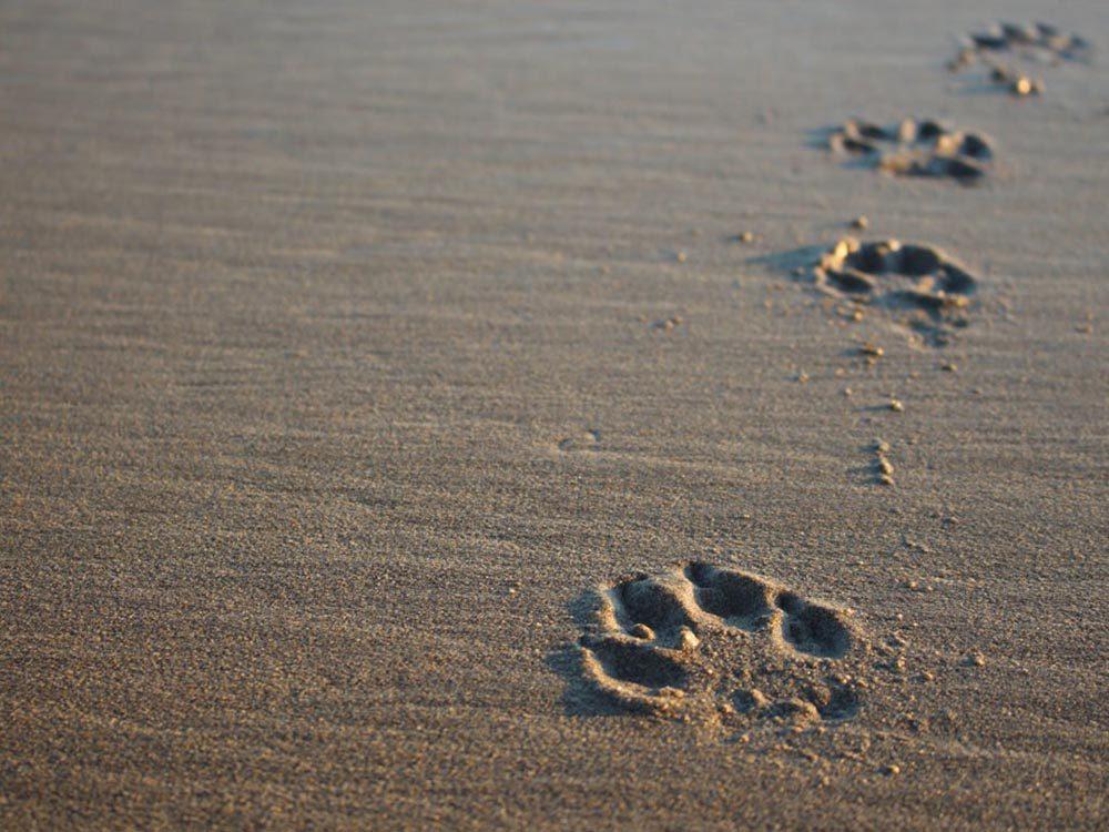 Pour la sécurité de votre chien: faites attention au sol chaud.