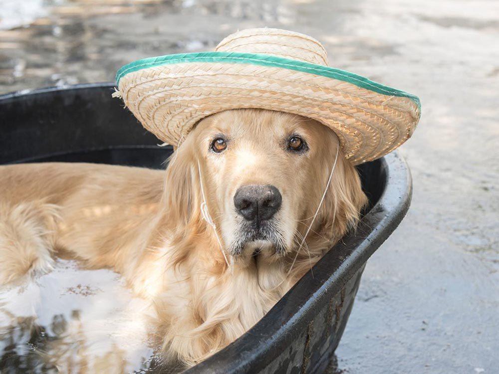 Pour la sécurité de votre chien: vérifiez sa fourrure.
