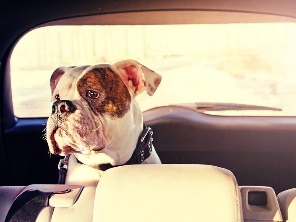 Pour la sécurité de votre chien: ne le laissez pas dans la voiture au soleil.