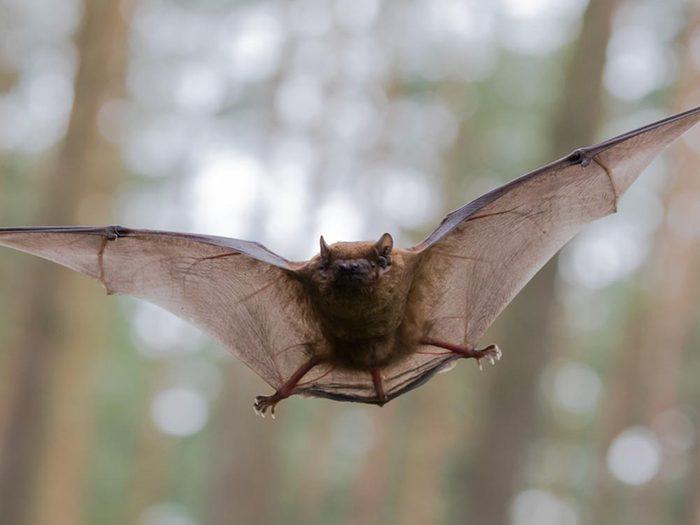 Lors du solstice d'été, les animaux nocturnes chassent moins.