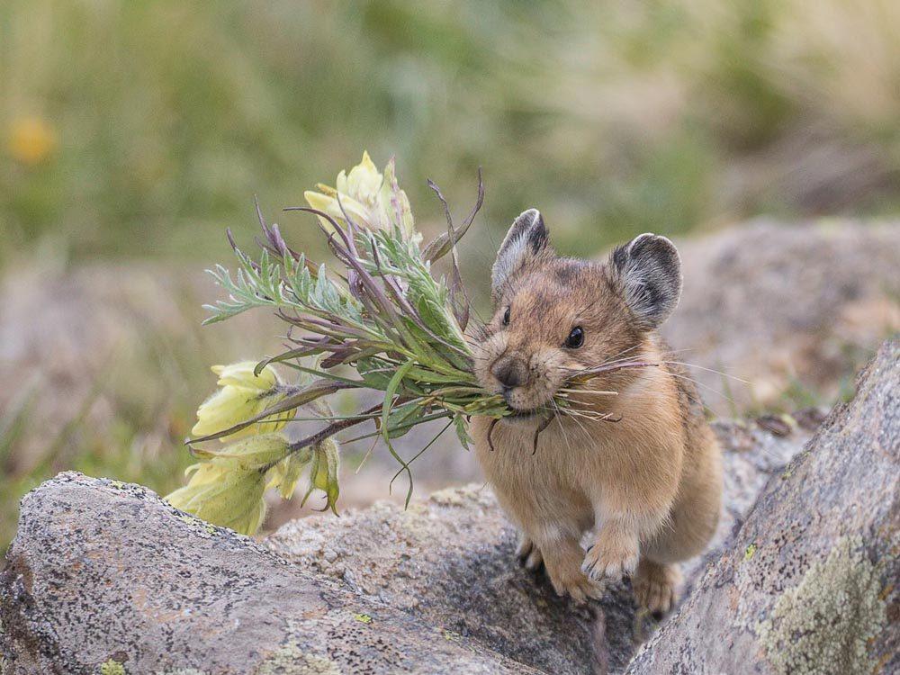 Lors du solstice d'été, les animaux en altitude en profitent davantage.