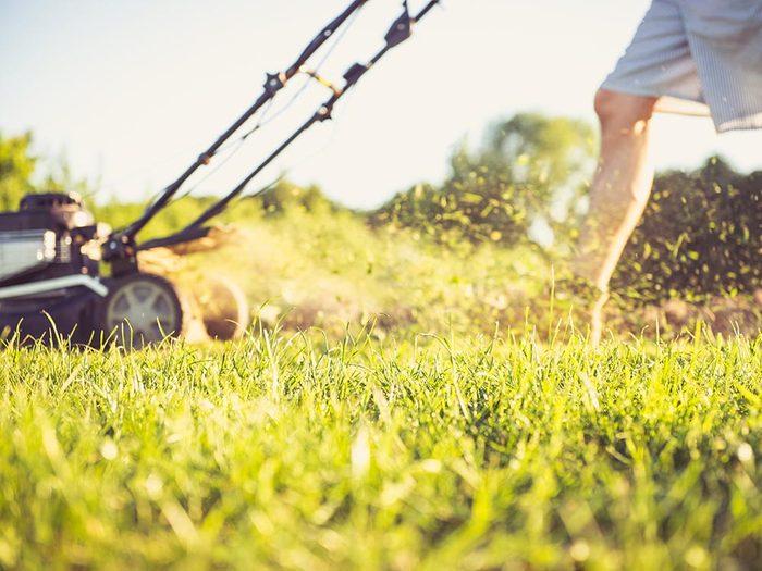 Tondre la pelouse pour évitez d'être envahie par les tiques du Québec.