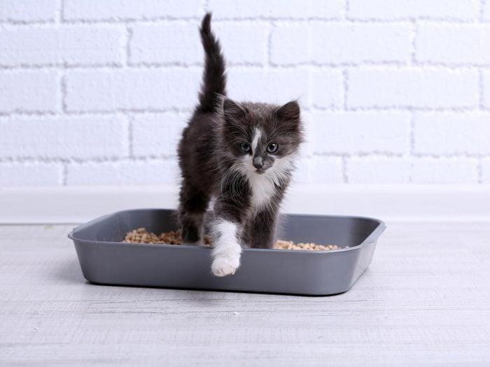 Utilisez le bicarbonate de sodium pour désodoriser la litière du chat.