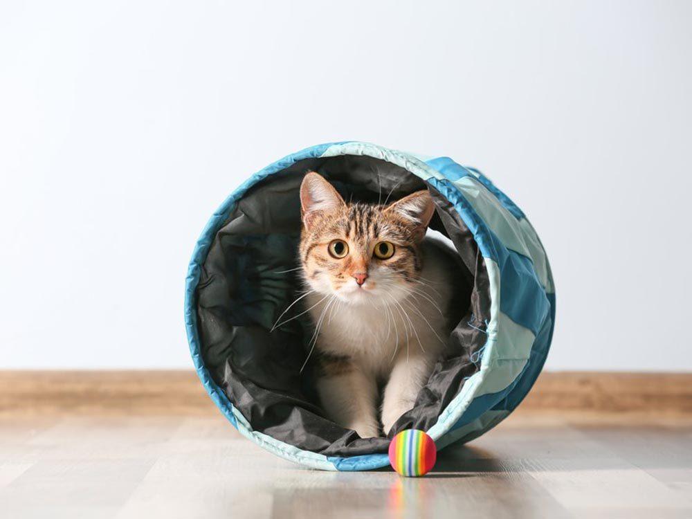 Fait insolite: Des chercheurs ont déjà transformé un chat vivant en téléphone.