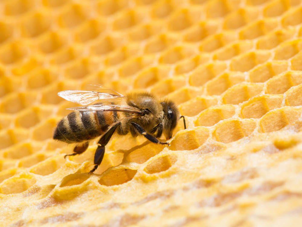 Avant un orage, les abeilles travaillent plus dur.