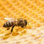 Une ruche d'abeilles de 2,5 m… dans un plafond!