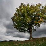 6 phénomènes bizarres qui annoncent un orage