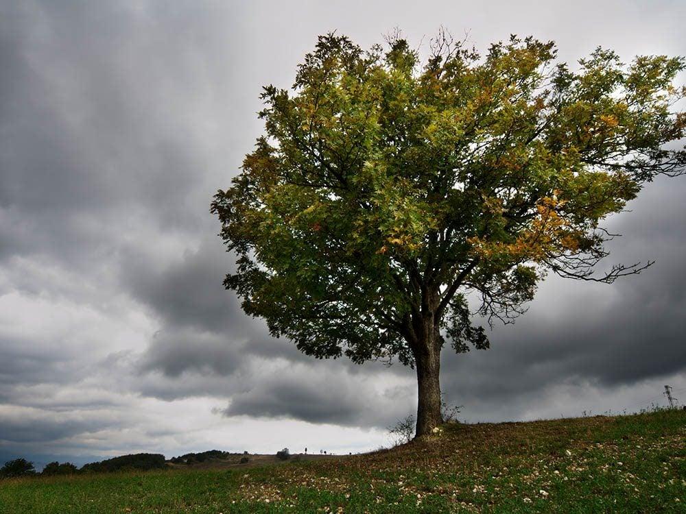 Avant un orage, les feuilles des arbres se retournent.