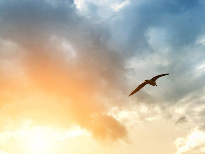 Avant un orange, les oiseaux prennent parfois la fuite.