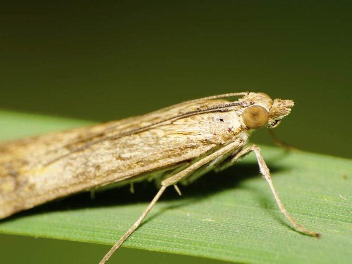 Avant un orage, les insectes batifolent moins.
