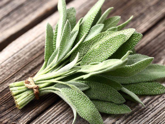 Plantes médicinales: cultivez de la sauge.