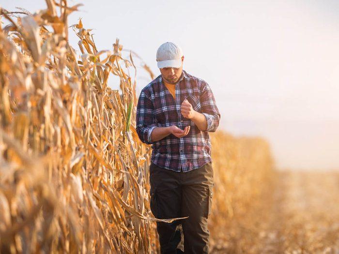 Les risques de développer un cancer sont plus élevés si vous êtes fermier.