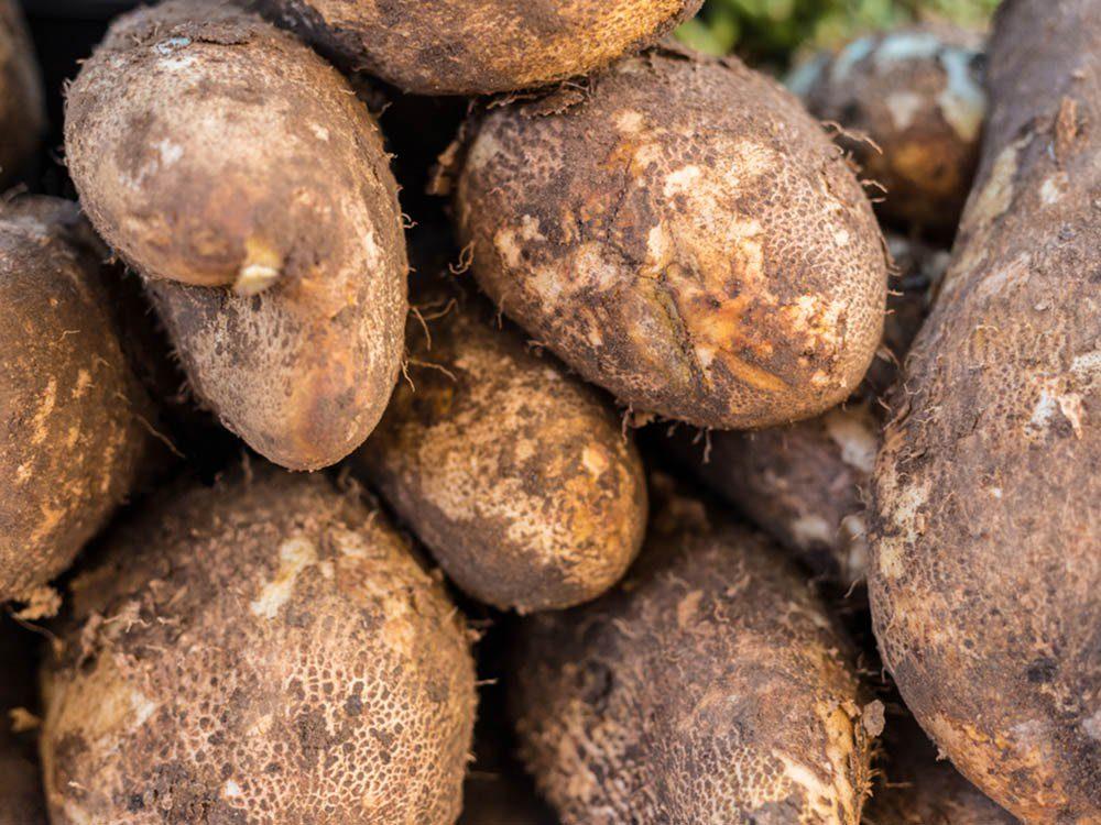 L'igname est un aliment santé à consommer avec modération.