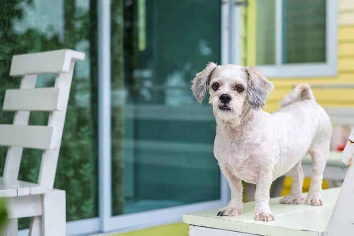 Décoder les signes de votre chien en colère: son corps se raidit.
