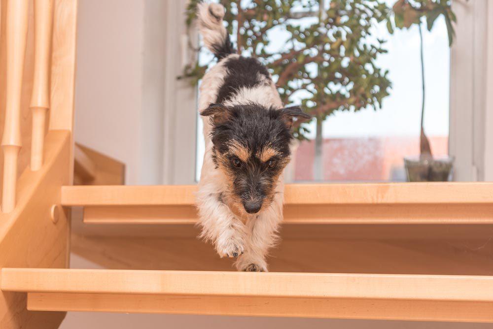 Décoder les signes de votre chien en colère: il ne reste pas assis