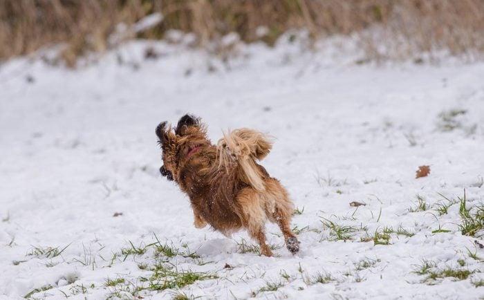 Décoder les signes de votre chien en colère: il ne s'approche plus de vous.
