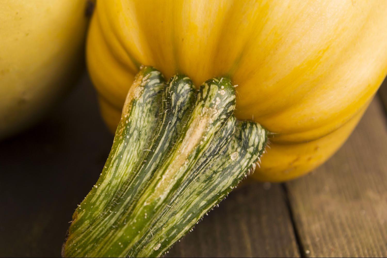 La citrouille fait partie des fruits et légumes phare de cette saison.
