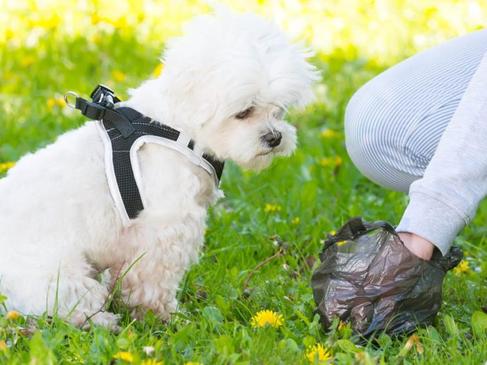 Objets volés les plus étranges: du caca de chien.