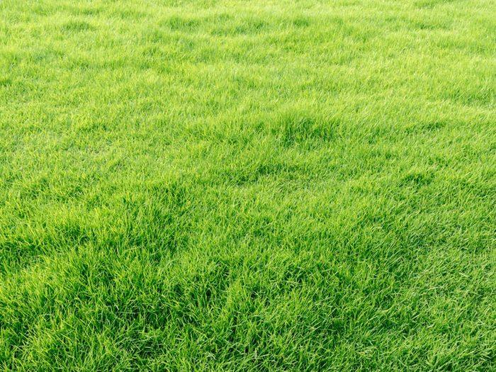 Le palmarès des objets volés les plus étranges comprend une pelouse.