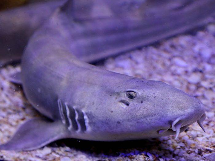 Le palmarès des objets volés les plus étranges comprend un requin vivant.