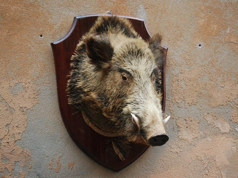 Le palmarès des objets volés les plus étranges comprend une tête de sanglier.