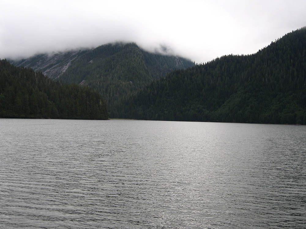 La recherche de l'ours grizzly se fait à l'embouchure de la rivière Khutzeymateen.