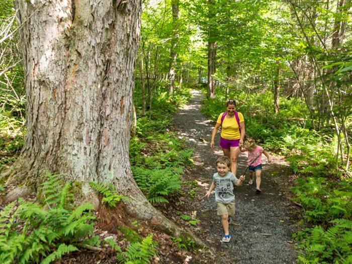 Profitez d'une randonnée pédestre au parc national de Frontenac.