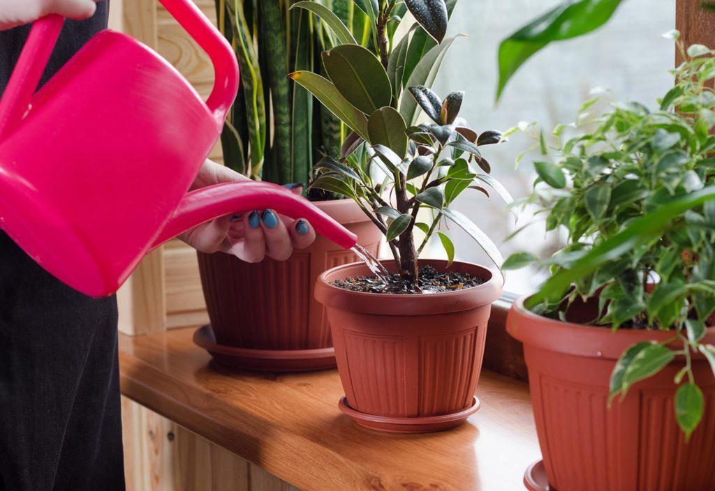 Le sel d'epsom est utile pour redresser le feuillage des plantes.