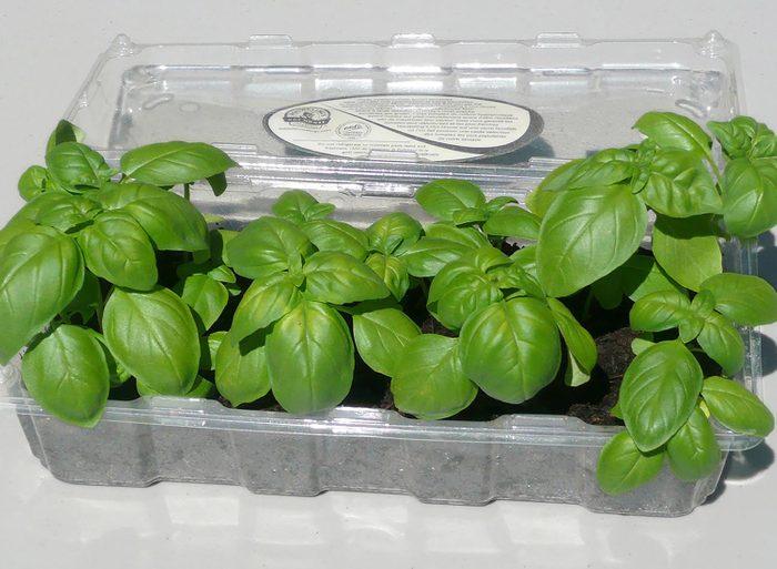 Trucs rénovation: recyclez vos contenant en plastique en les transformant en mini serres pour faire pousser vos plantes.