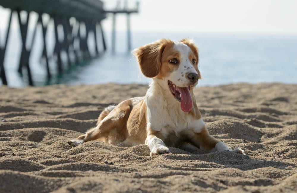 Adopter un chien nécessite d'avoir un permis.