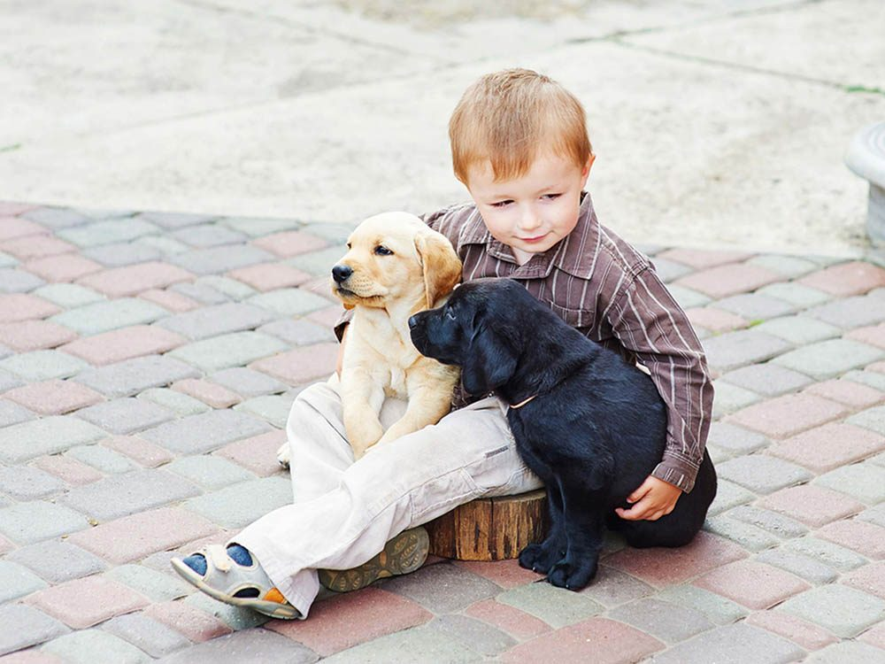 Adopter un chien dans un refuse : il pourrait être différent de vos autres chiens.