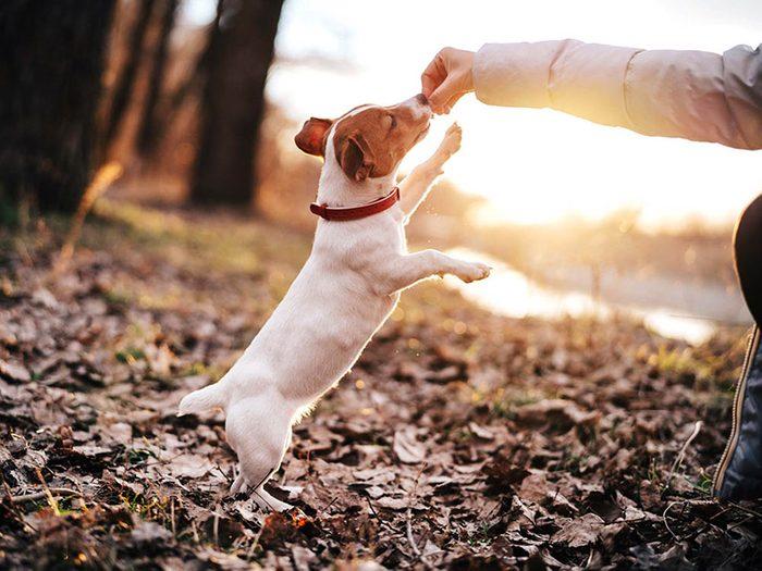 Avant d'adopter un chien, sachez qu'il faudra l'entraîner.