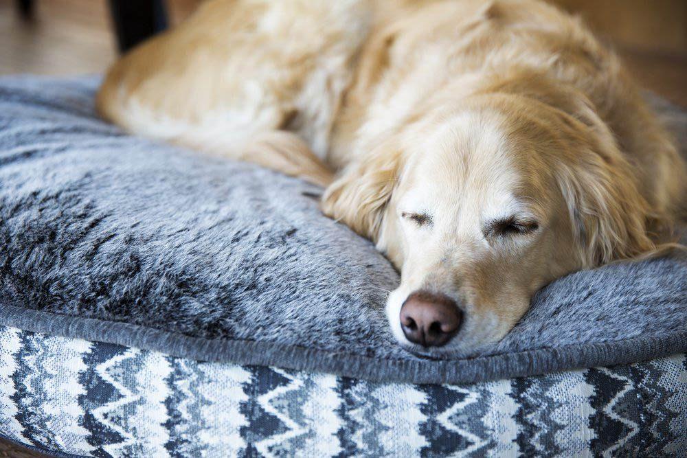 Adopter un chien dans un refuse signifie que vous ne connaitrez jamais sa race.