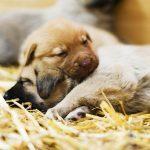 12 choses à savoir avant d'adopter un chien de refuge