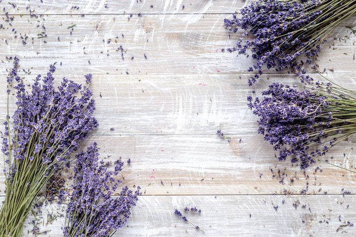 Pour prévenir la maladie d'Alzheimer, respirez de la lavande.