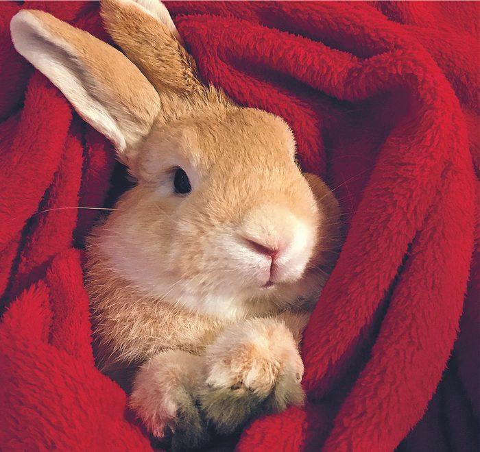 Animal de compagnie : Mr. Clover est un lapin exceptionnel.