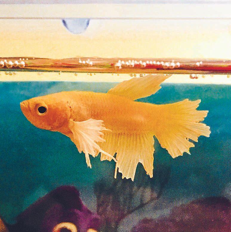 Nemo est un animal de compagnie exceptionnel.
