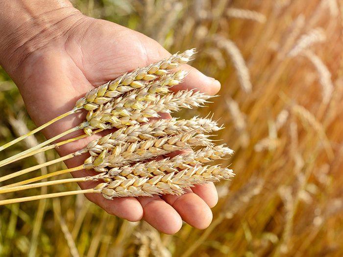 Y a-t-il une différence entre «sans gluten» et «sans blé»?