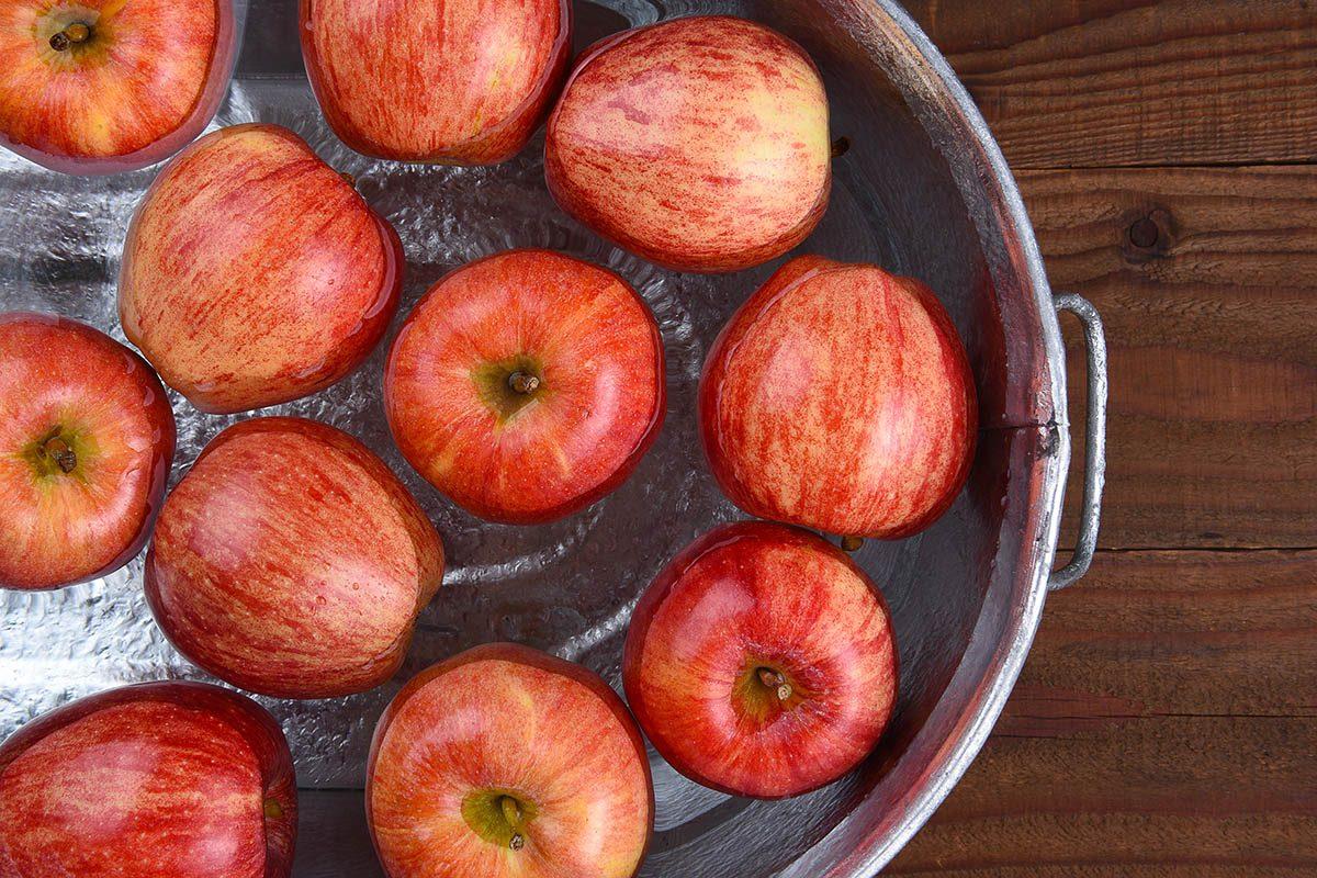 Halloween : le jeu de la pomme dans l'eau est né en Grande-Bretagne.